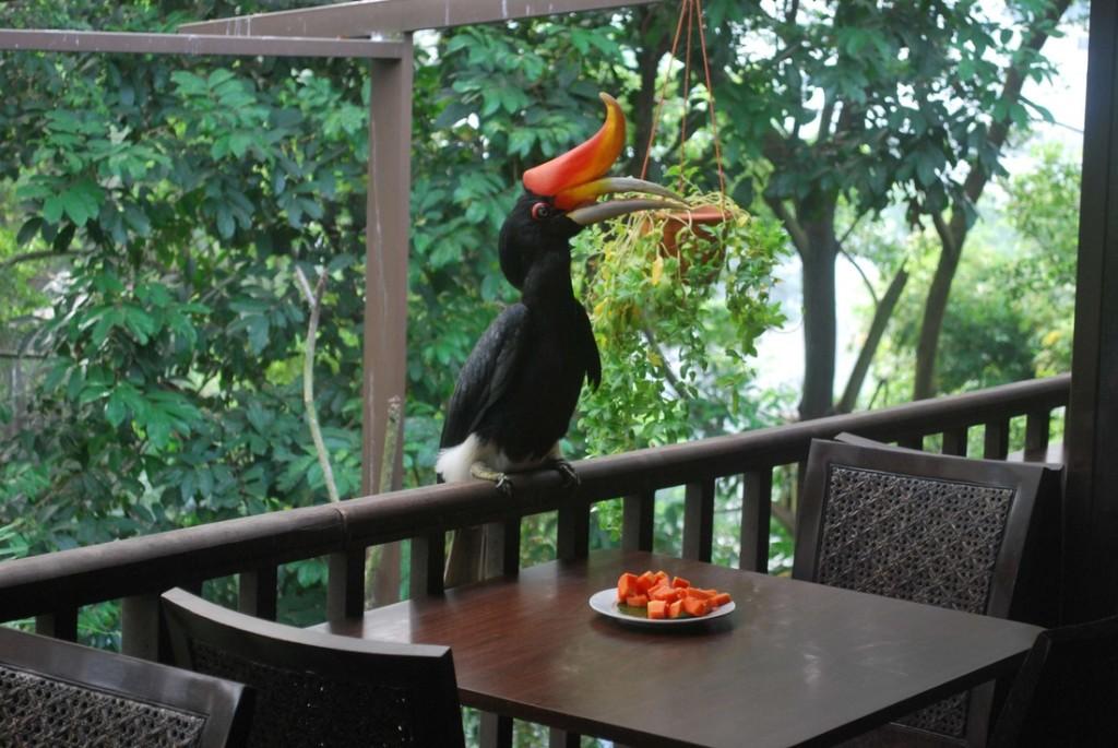KL Bird Park World's Largest Free Flight Walk-In Aviary