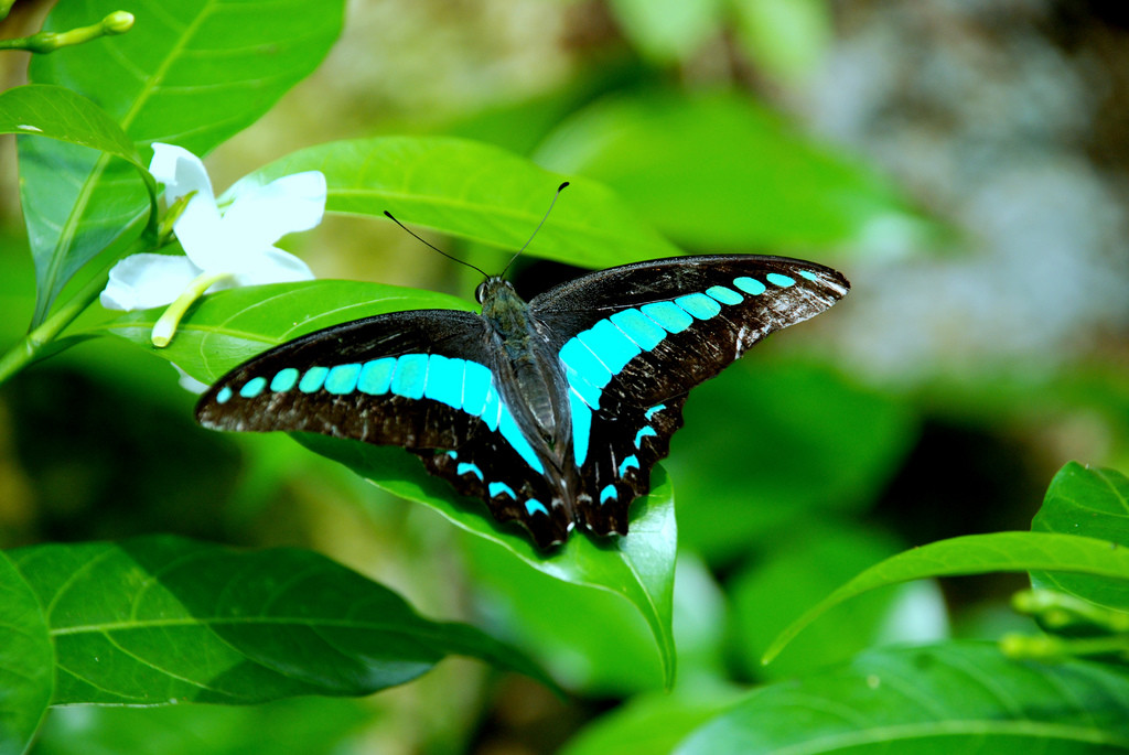 KL Butterfly Park Butterflies In Its Natural Habitat